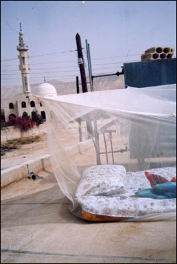 My bed on my roof in the Jordan River Valley, Joffa, Jordan.  From here I could see the lights of East Jerusalem on the mountains above and the city of Jerico below, just across the River Jordan into Palestine.  Each night I would say ¨Good Night Mosque, Good Night Jerusalem¨ and awake with the morning call to prayer.